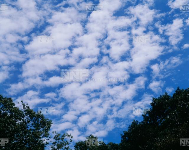 ひつじ雲(高積雲) / ≪写真素材・ストックフォト≫ NNP PHOTO LIBRARY