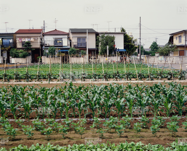 近郊農業 / ≪写真素材・ストックフォト≫ NNP PHOTO LIBRARY
